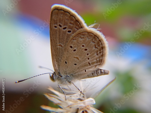 Fotografie, Obraz Close-up Of Butterfly Pollinating Flower
