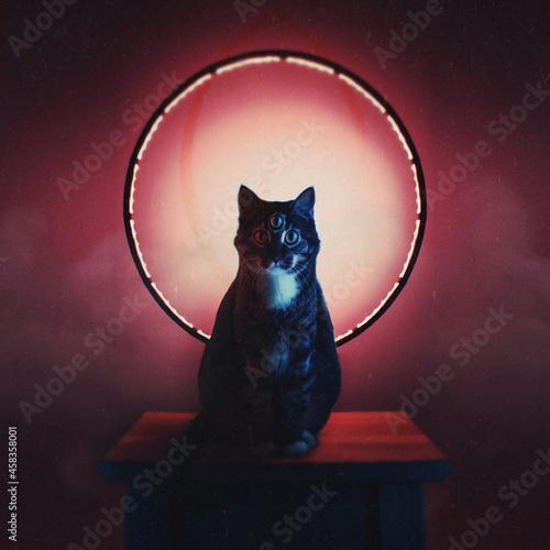 Fotografie, Tablou Portrait Of Cat Sitting On Table