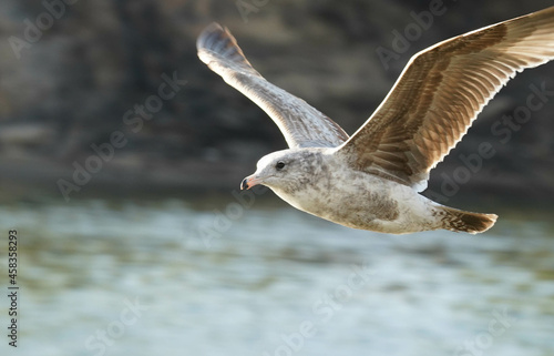 Close-up Of Seagull Flying Over Sea Fototapete