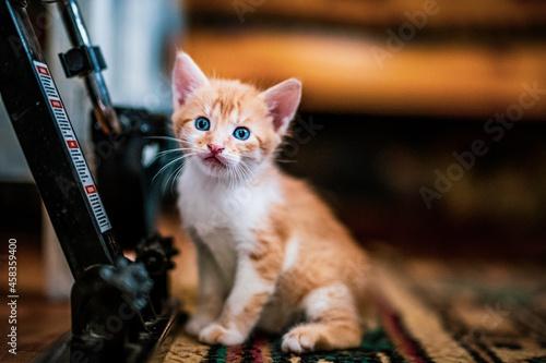 Obraz na plátně Close-up Portrait Of Kitten Indoors
