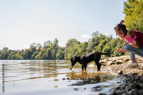 Teaching puppy to fetch a stick from the river Fototapeta