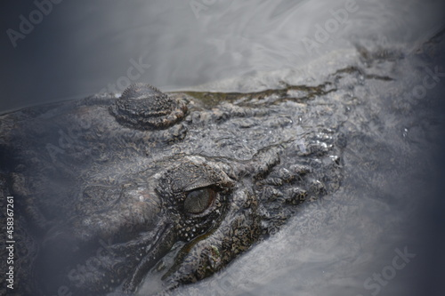 Close-up Of Crocodile In The Water Fotobehang