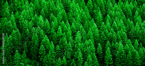 Photo Lush Green Pine Forest of Trees Mountainside Wilderness Environment