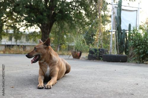 Fotografie, Obraz View Of A Dog Sitting On Footpath