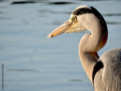 Stampa su Tela Close-up Of A Heron