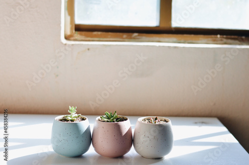 Obraz na plátně Row of decorative pots with small succulents