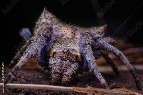 Close-up Of Spider Fototapet