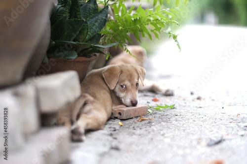 Cuadros en Lienzo Portrait Of A Dog