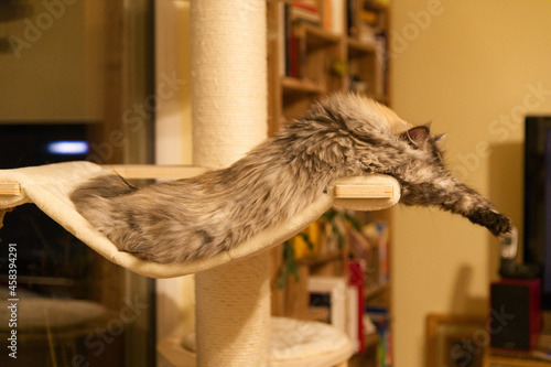Fotografie, Tablou The Relaxed Cat