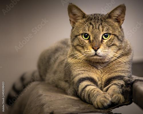 Fotografie, Obraz Close-up Portrait Of Tabby Cat