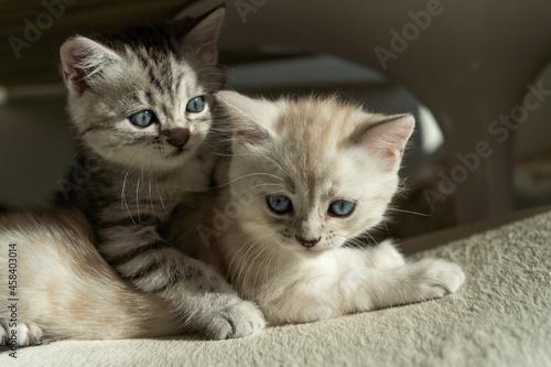 Obraz na plátně Close-up Portrait Of A Kitten