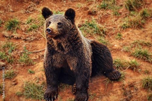 Fotografía Bear Standing In A Field