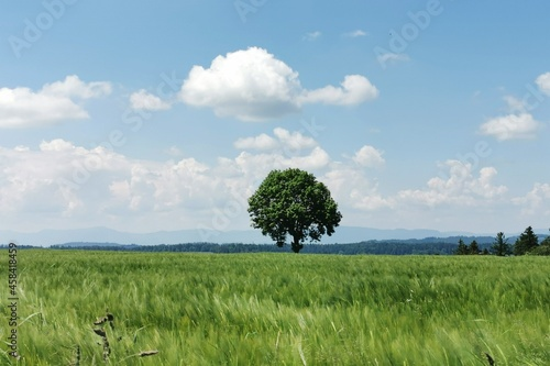 Fototapeta Scenic View Of Agricultural Field Against Sky