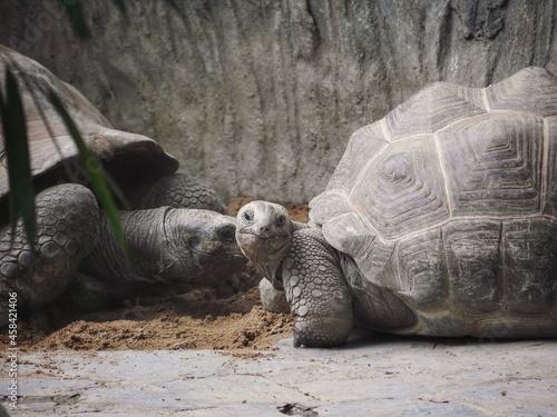 Canvastavla Turtle In Zoo