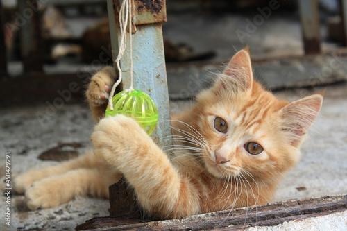 Hong Kong Street Kitten Fototapet