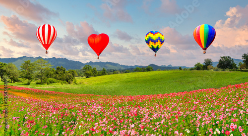 Fotografiet Panoramic view of landscape of hot air balloon floating above the cosmos flower field and green field on the hill at sunrise time