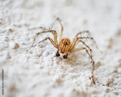 Fotografering Close-up Of Spider