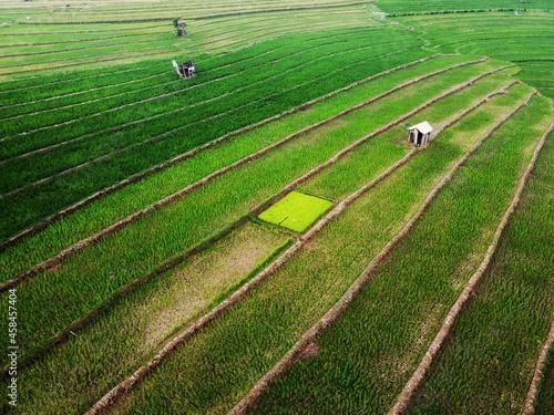 Fototapeta Aerial Panorama Of Agrarian Rice Fields Landscape Like A Terraced Rice Fields Ub