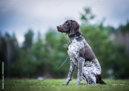 Tablou Canvas Dog Looking Away