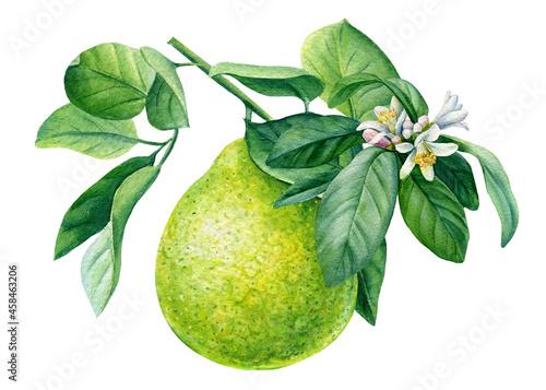 Fotografiet Citrus fruit