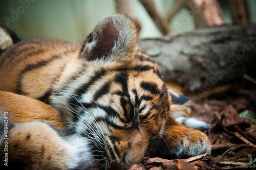 Obraz na plátně Close-up Of Cat Sleeping