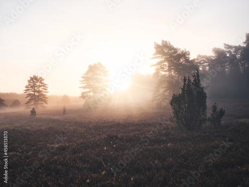 Fototapeta In Wald und Heide