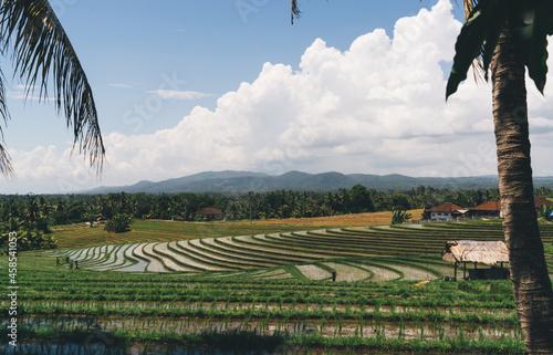 Obraz na plátně Terraced paddy field on sunny summer day