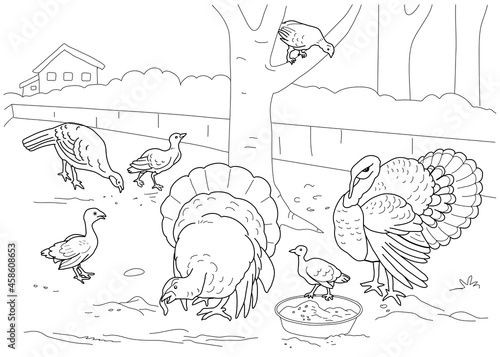 The turkey coloring book. Farm. Fototapeta