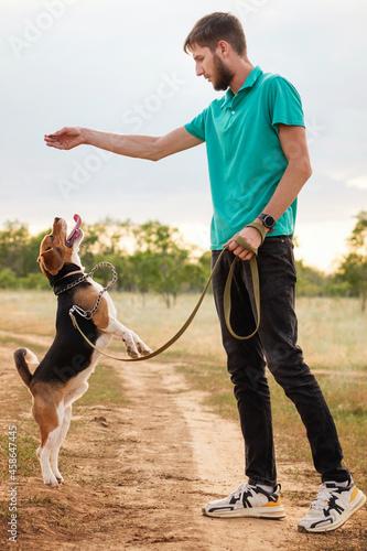 Unrecognizable man training purebred beagle wearing leash Fototapet