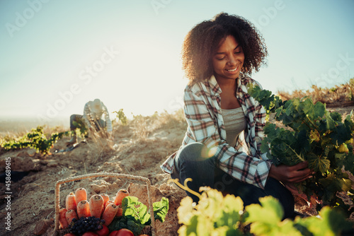 Obraz na plátně Mixed race female farmer picking fresh vegetables from farm land while male co w