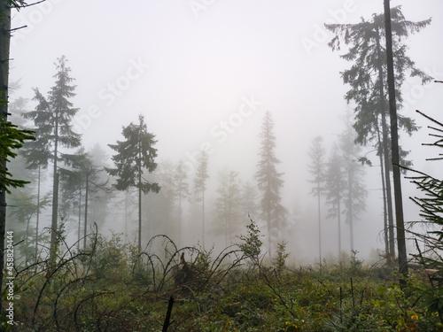Murais de parede Forest in the fog - Babia Gora Mountain - Beskidy Mountains
