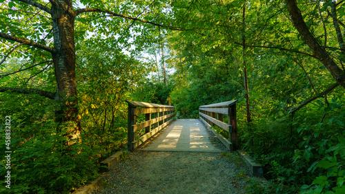 Fotografiet Sunlight through the trees highlighting wooden footbridge on Shoreline Trail, bo