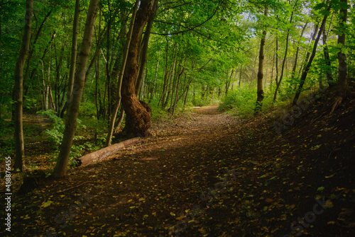 footpath in the woods Fototapet
