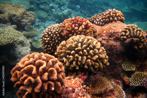 Obraz na plátně Beautiful colourful coral reef in Maldives full new coral colonies
