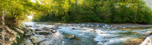 Foto Panorama Grüner Wald im Sonnenlicht am Fluss