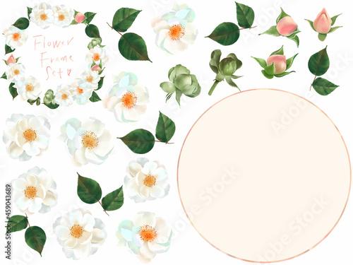 Tela ベクター素材優しい色使いの薔薇の花とかわいいつぼみと葉っぱの白バックイラストとフローラルフレーム素材
