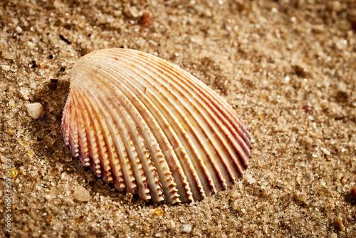 Concha de molusco isolada num fundo de areia Poster Mural XXL