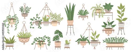 Obraz na plátně Set of plants in hanging pots