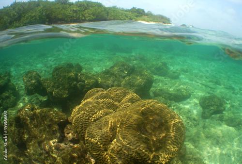 Canvas coral reef , caribbean sea , Venezuela