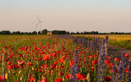 Fototapeta A little valley of flowers in countryside