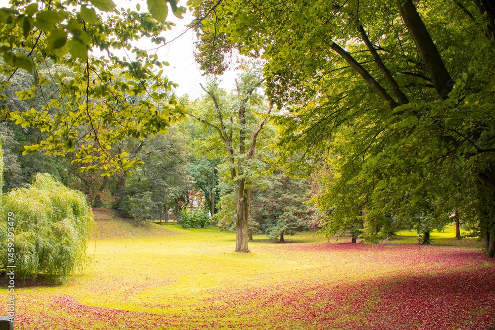 Krajobraz w parku jesienią