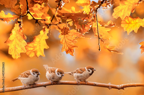 Tela little funny birds are sitting in the autumn garden among the golden foliage