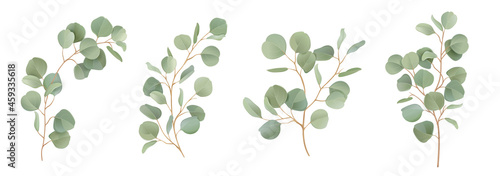 Fotografija Eucalyptus vector watercolor floral set