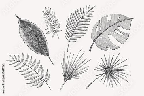 Obraz na plátně Large set of hand-drawn palm leaves of different shapes