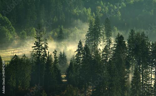 Jesień, mglisty krajobraz