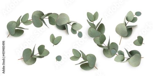 Obraz na plátně Green leaves eucalyptus isolated
