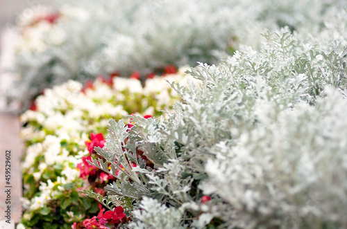 Fototapeta Scenic view of  flowerbed and a  in an attractive  garden