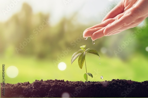Canvas-taulu Hand watering plants that grow on good quality soil in nature, plant and tree growing ideas