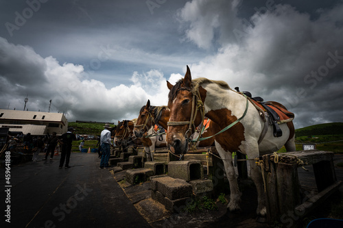 Fotografia, Obraz 阿蘇の馬