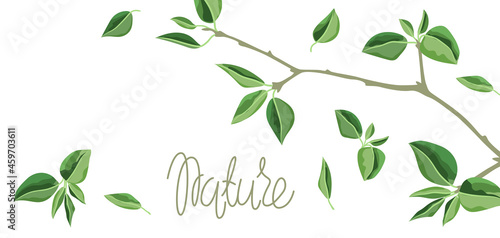 Fotografie, Obraz Card or background with branches and green leaves